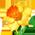 Déesse de reconnaissance  Daffodil_p.9