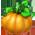 Banshee Pumpkins_p.422